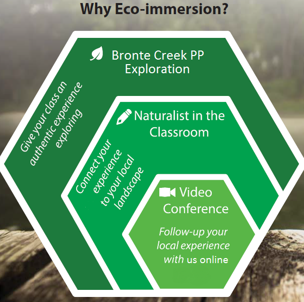 why ecoimmersion